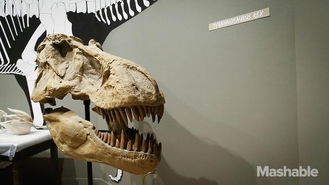 Impression 3D squelette T-Rex