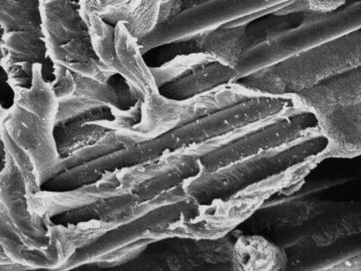 Fibre - Carbone - composite - impression 3D